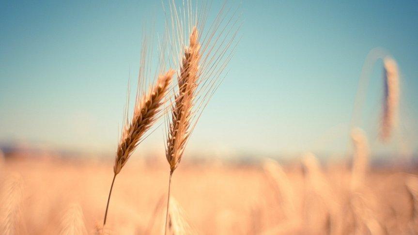 Pod koniec marca rusza I nabór wniosków o przyznanie pomocy na tworzenie krótkich łańcuchów dostaw